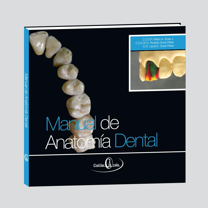 Anatomía Dental y Encerado por Adición | Cuellar Ayala